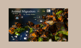 Journey For Survival - Animal Migration