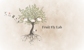 Fruit Fly Lab
