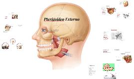 Copy of Pterigoideo Externo