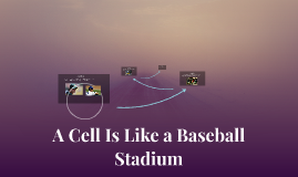A Cell Is Like a Baseball Stadium