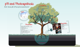 Copy of pH and photosynethis, hopefully Alex wont mess this one up