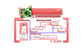 Copy of Historia Natural de la Enfermedad Influenza AH1N1