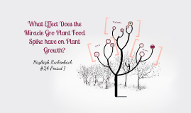"""""""What effect does the Miracle Gro Indoor Plant Food Spike have on Sweet Pea Seeds?"""""""