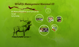 Wildlife Management Mammal ID