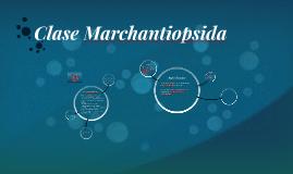 Clase Marchantiopsida