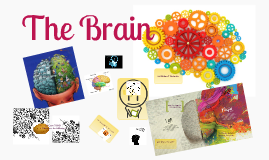 Copy of Copy of Brain Poster by Danielle Kenney
