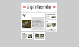 Alligator Conservation