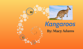 Copy of Kangaroos SWJCS