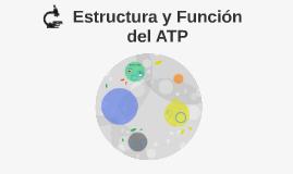 Copy of Estructura y Función del ATP