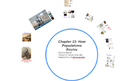 Chapter 13: How Populations Evolve