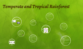 Temperate and Tropical Rainforest