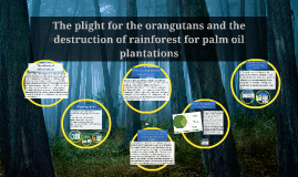 The plight for the orangutans and the destruction of rainfor