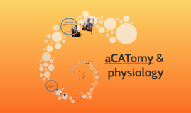 aCATomy and physiology