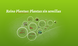 Copy of Reino Plantae: Plantas sin semillas