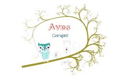 Aves - Coruja
