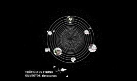 TRÁFICO DE FAUNA SILVESTRE EN COLOMBIA