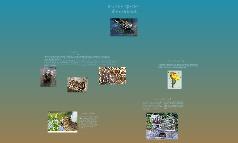 Invasive Species: The Nutria Rat