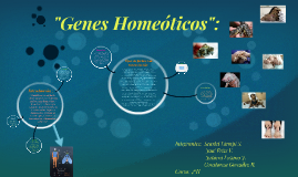 Copy of Genes Homeóticos