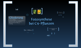 Fotosynthese bei C4-Pflanzen