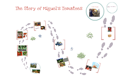 Miguel's Tomatoes