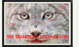 Copy of THE ENDANGERED CANADIAN LYNX