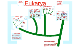 The Eukarya