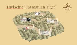 Thylacine (Tazmanian Tiger)
