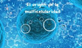 El origen de la multicelularidad