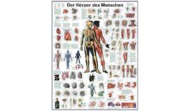 1.1 Grundbegriffe Anatomie