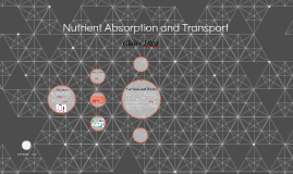 Nutrient Absorption and Transport