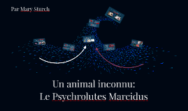 Un animal inconnu: Le Psychrolutes Marcidus
