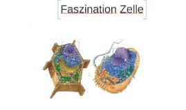 Copy of Faszination Zelle