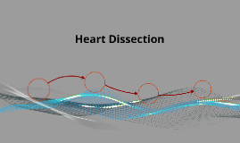 Heart Disection