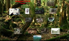 Aokigahara- Suicide Forest