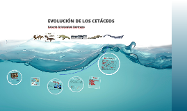 EVOLUCIÓN DE LOS CETÁCEOS
