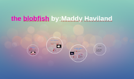 the blobfish by:Maddy Haviland