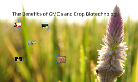 The Benefits of GMOs and Crop Biotechnology