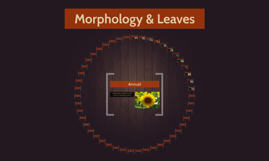 Morphology & Leaves