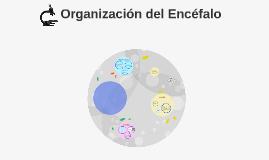 Copy of Organización del Encéfalo