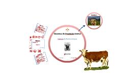 7Produção de Bovinos de Carne - Maneio