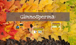 Copy of Gimnosperma: