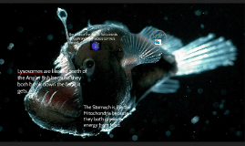 Comparing the Anglerfish