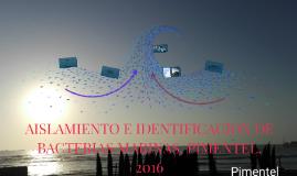AISLAMIENTO E IDENTIFICACION DE BACTERIAS MARINAS, PIMENTEL.