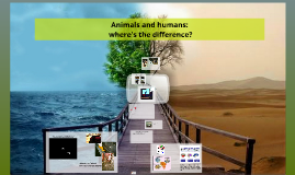 Animals and humans: where's the difference?