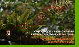 Conservación y propagación de epífitas