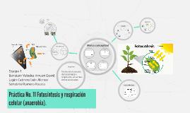 Práctica No. 11 Fotosíntesis y respiración celular (anaerobi