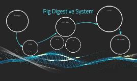 Pig Digestive System