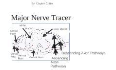 Major Nerve Tracer