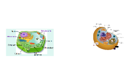 Cell Organelle