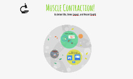 Muscle Contraction!
